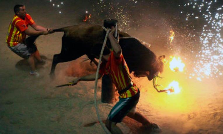 Pongamos fin a los festejos con toros