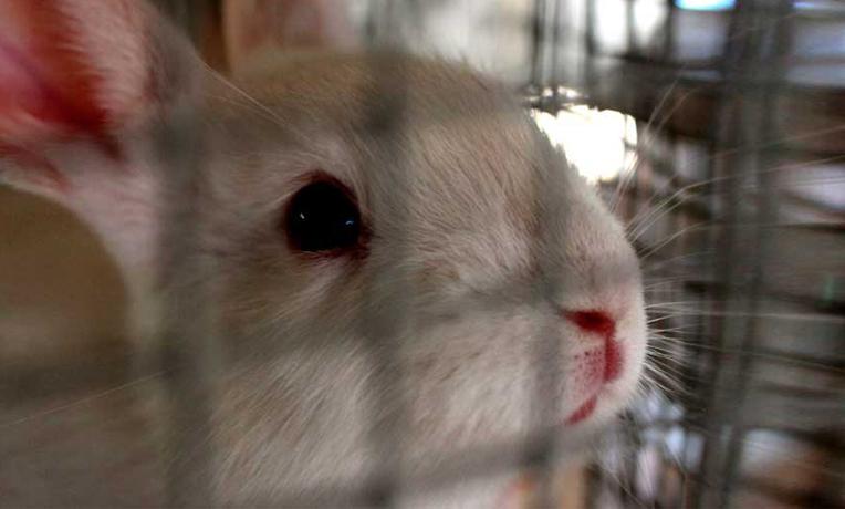 ¡Firma para acabar con las jaulas de cría de conejos!