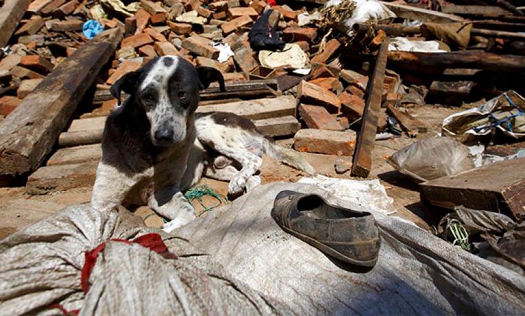 Ayuda a los animales víctimas del terremoto de México