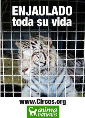 Cartel para apoyar campañas contra circos con animales.