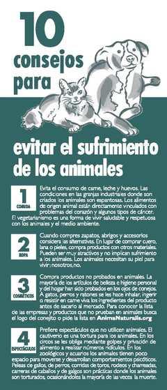 10 Consejos para Evitar el Sufrimiento de los Animales