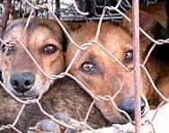 perros corea del sur