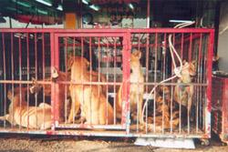 mercado carne perro