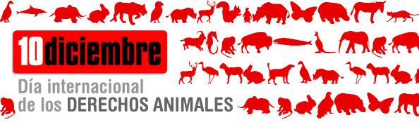 10 diciembre. Dia Internacional derechos animales