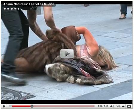 imagen video impactantes: