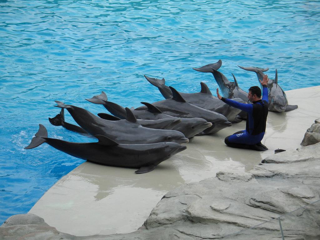 juego delfin: