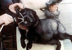 Abrigos de piel de animales precios
