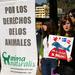 Activistas ensangrentados de AnimaNaturalis simulan ser ballenas cazadas.
