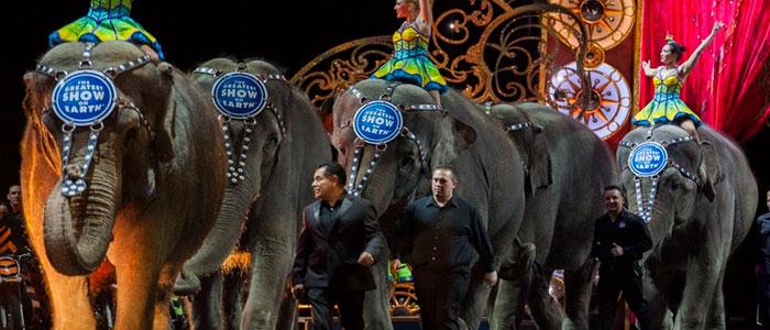 Avances importantes en el fin del uso de animales en circos