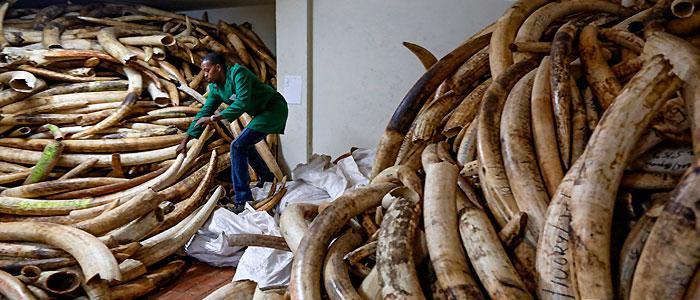 Avances contra la caza y tráfico ilegal