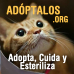 Visita Adoptalos.org: Adopta,                                    Cuida, Esteriliza