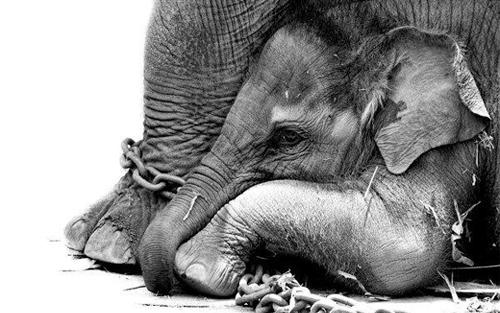 Por un                                    Circo Sin Animales