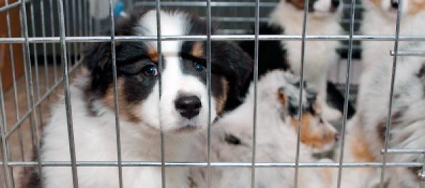 ¡Acabemos con la venta de animales!