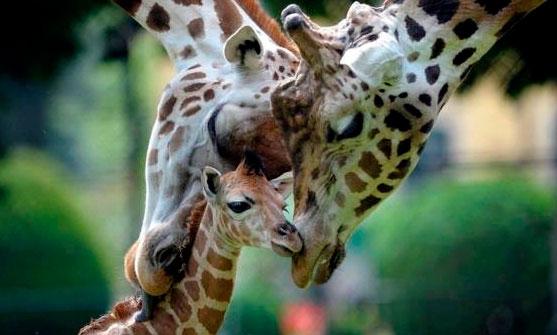 Celebra tu amor por los animales