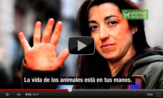 Apoya a AnimaNaturalis para salvar                                  la piel de los animales