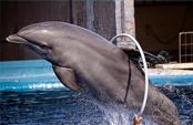 Entrenamiento de los delfines