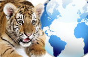 Circos con animales y las leyes ¿qué pasa a nivel internacional y nacional?