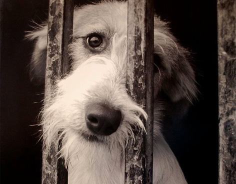 Como denunciar maltrato animal en Argentina