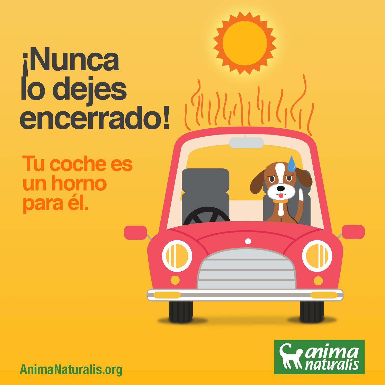 Los peligros del coche para el perro en verano