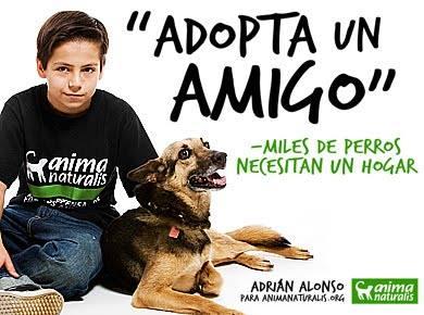 Adopción de perros y gatos en Colombia
