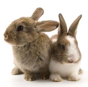 Lista de productos NO probados en animales a la venta en diversos países