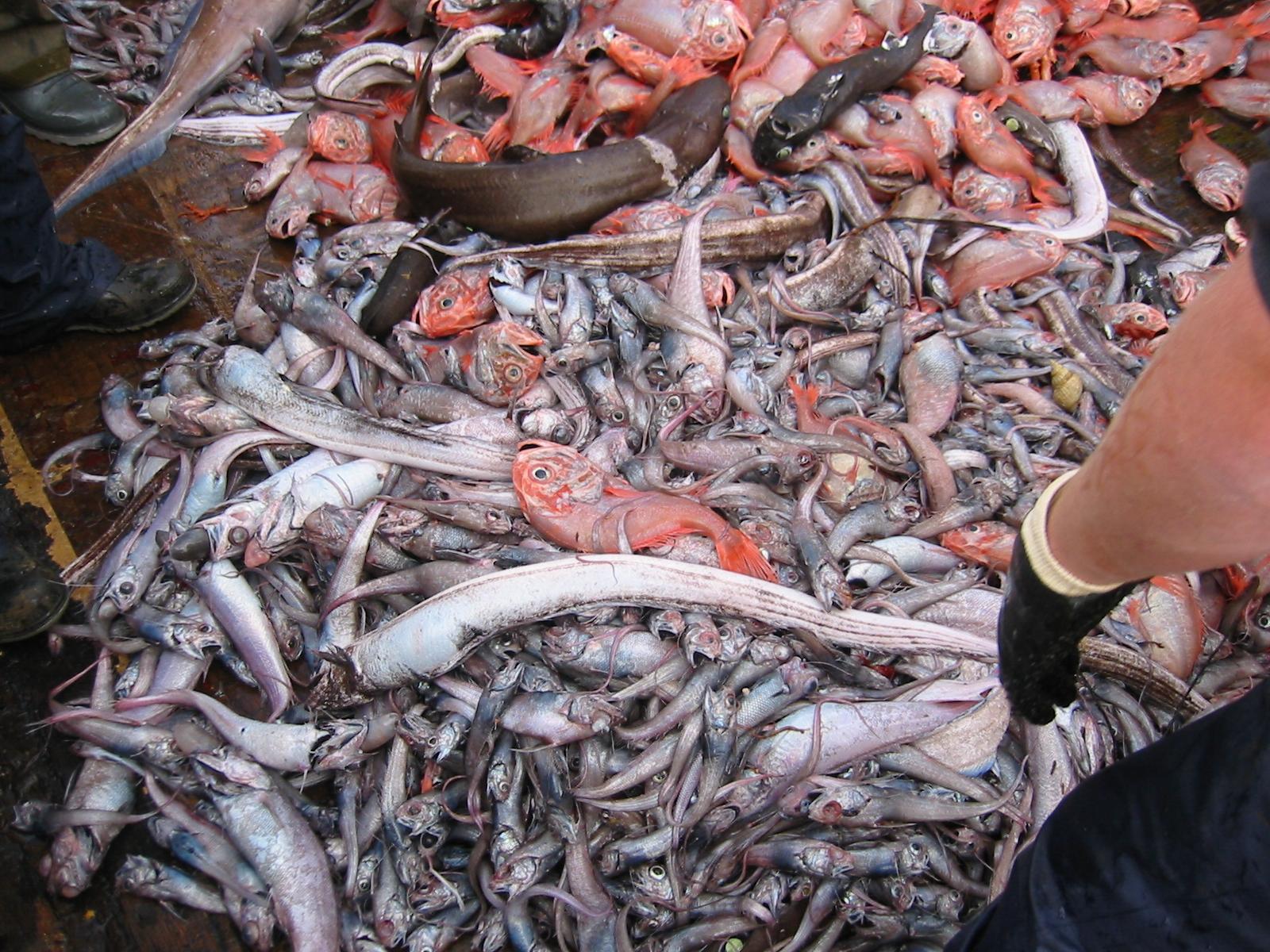 La pesca: una agonía acuática