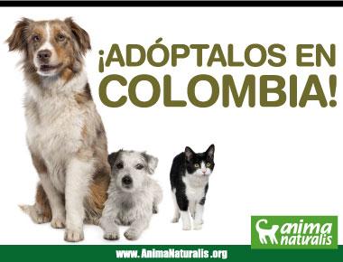 chicos y chicas jodidos por perros Videos de zoofilia