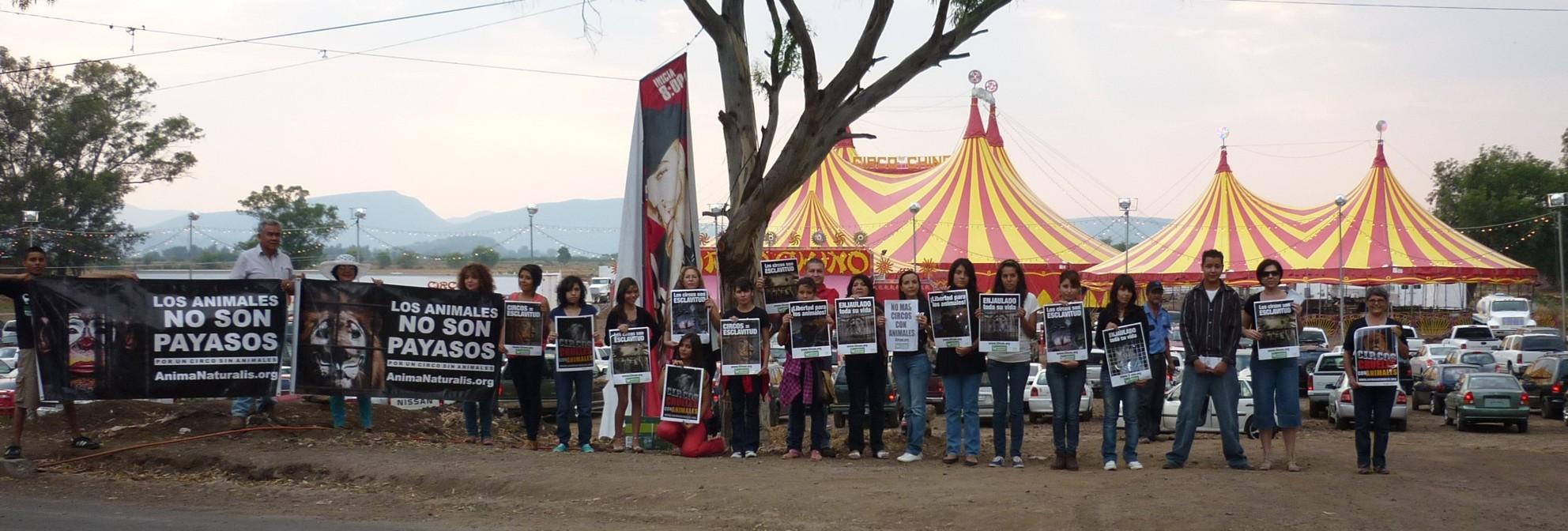 Animanaturalis protest contra el circo chino de pek n en for Espectaculo chino en mexico