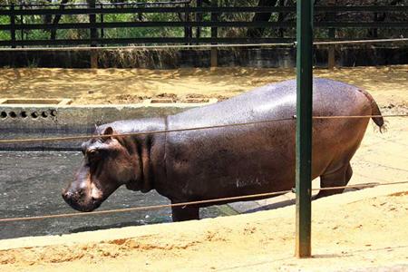 En emergencia los animales del Zoológico Metropolitano del Zulia