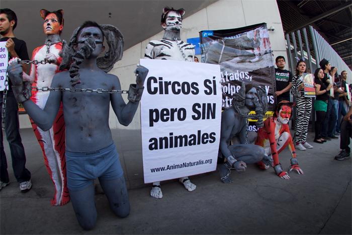 ¡Exitosa protesta contra circo Ringling Brothers en Distrito Federal!