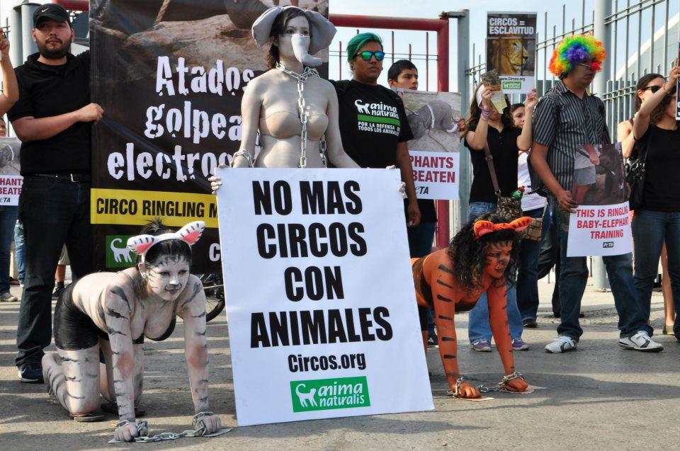¡AnimaNaturalis protestó contra circo Ringling Brothers en Monterrey!