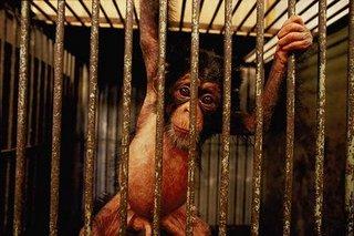 Bogotá prohibe los circos con animales