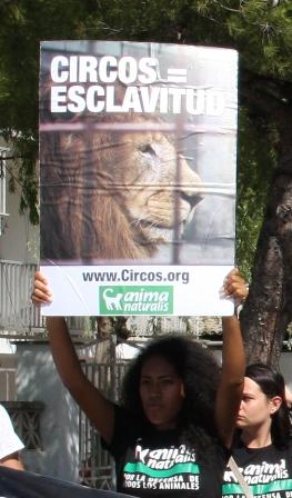 AnimaNaturalis protesta contra los circos con animales en el Puerto de Alcudia