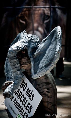 Activistas se ponen en el lugar de las elefantas del Zoo de Barcelona