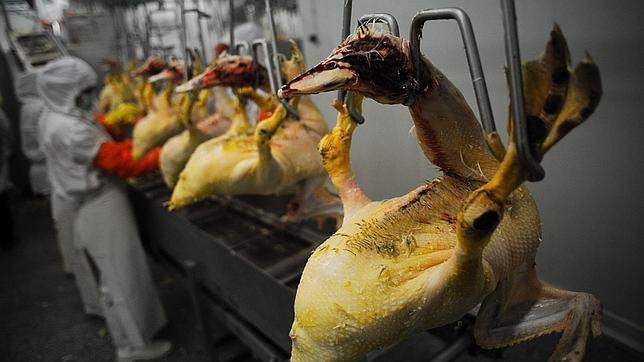 California prohíbe el foie gras