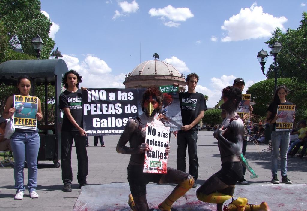 AnimaNaturalis protestó contra peleas de gallos en Durango