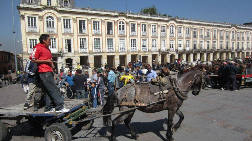 Caballos carretilleros de Bogotá buscan hogar ¡Dales una oportunidad!