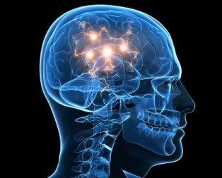 Neurocientíficos reconocen la conciencia en mamíferos y pájaros