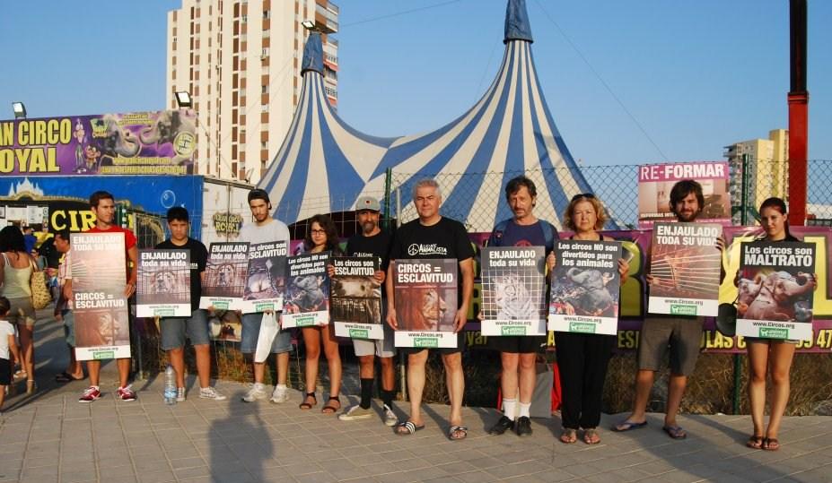 Contra los circos con animales, ¡también en Alicante!