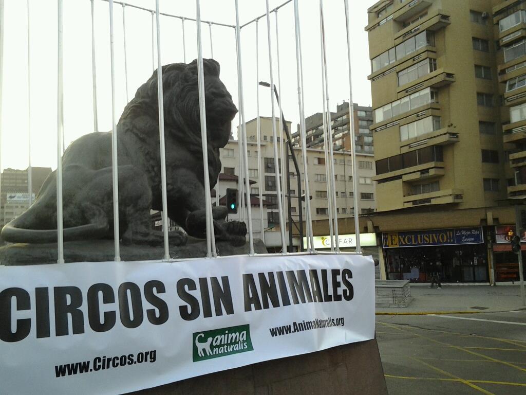 """Exitoso lanzamiento de campaña: """"Circos sin animales"""" de AnimaNaturalis en Chile"""