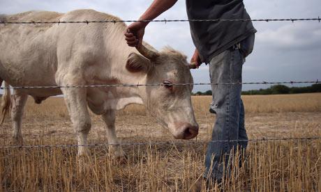 La escasez de alimentos podría obligar al mundo al vegetarianismo, advierten científicos