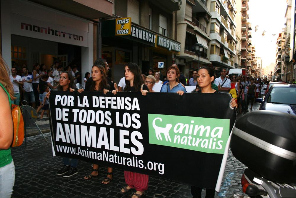 Cientos de personas se manifiestan contra las Becerradas de Algemesí
