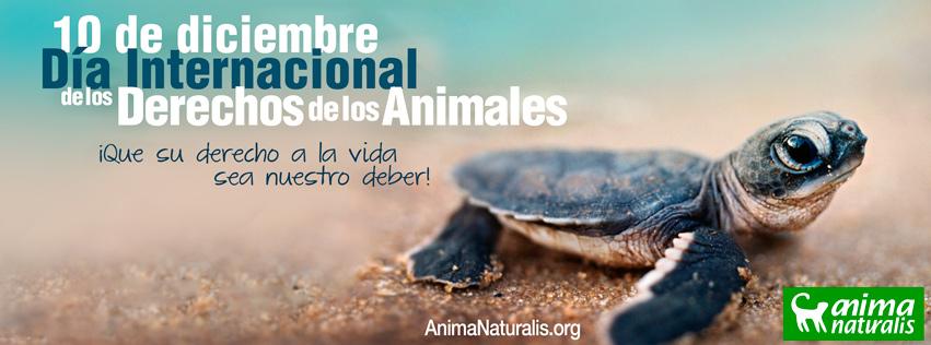 10 de Diciembre: Día Internacional de los Derechos Animales