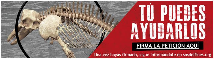 AnimaNaturalis se une a la plataforma                              SOS Delfines