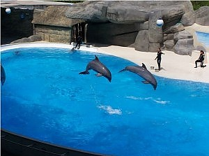 ¡Retiran espectáculo con delfines en el parque de atracciones más grande de Italia!