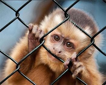 ¡Firma YA para pedir el fin de la vivisección!