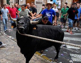 Maltratar toros en Cataluña estará permitido si es tradicional