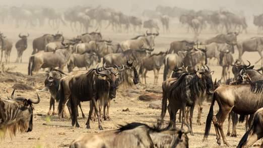 Tribu Masai, desalojada para el beneficio de cazadores de leones