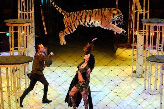 Senado aprueba prohibición de animales en circos en Colombia