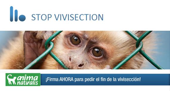 Tú puedes poner fin a la vivisección en Europa: firma aquí
